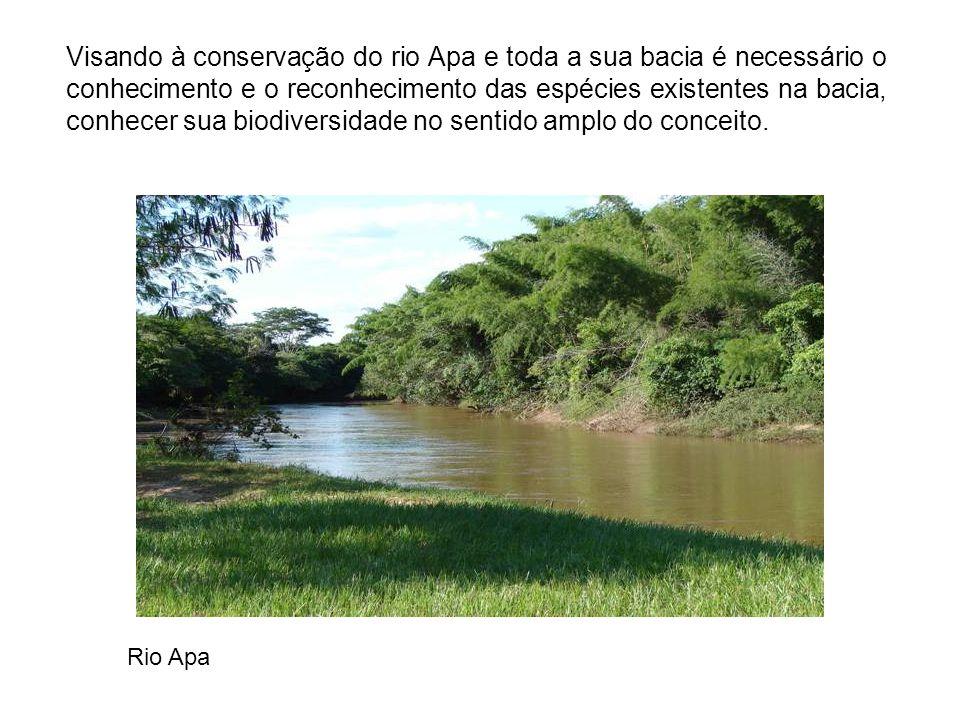 Visando à conservação do rio Apa e toda a sua bacia é necessário o conhecimento e o reconhecimento das espécies existentes na bacia, conhecer sua biod