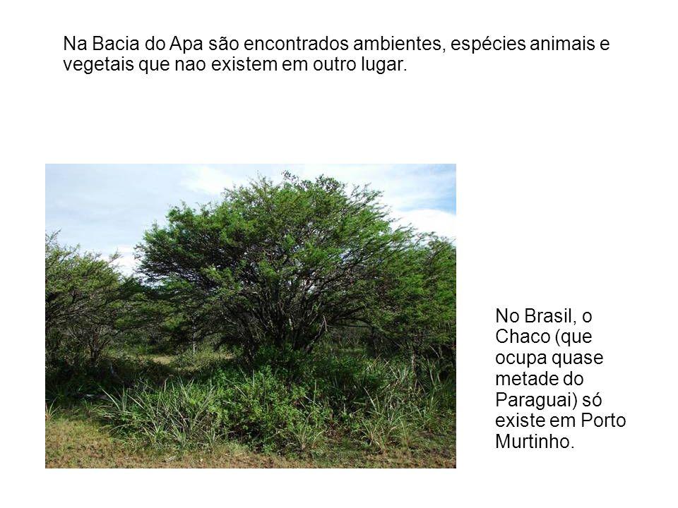 No Brasil, o Chaco (que ocupa quase metade do Paraguai) só existe em Porto Murtinho. Na Bacia do Apa são encontrados ambientes, espécies animais e veg