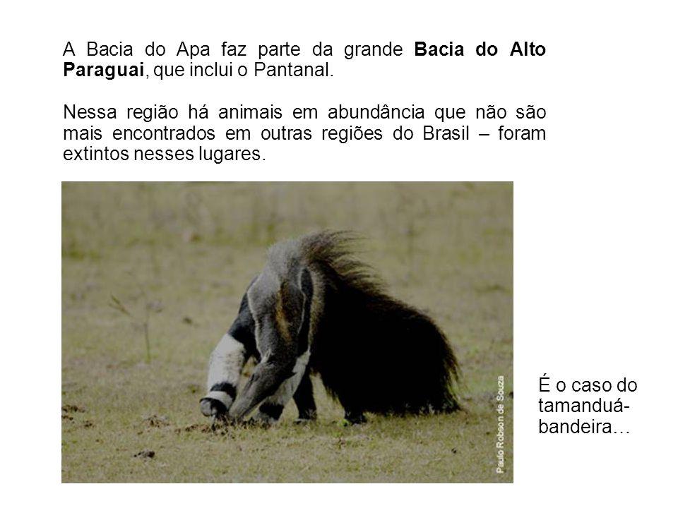 A Bacia do Apa faz parte da grande Bacia do Alto Paraguai, que inclui o Pantanal. Nessa região há animais em abundância que não são mais encontrados e