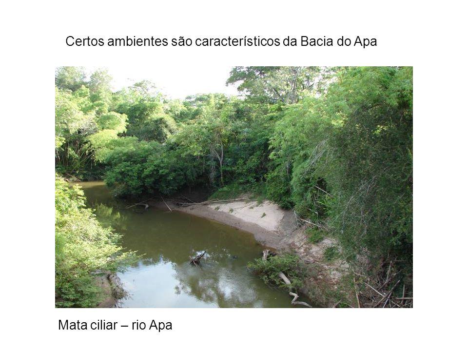 Mata ciliar – rio Apa Certos ambientes são característicos da Bacia do Apa