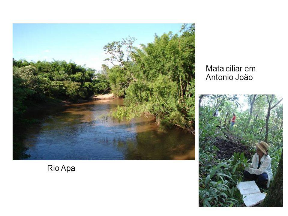 Rio Apa Mata ciliar em Antonio João