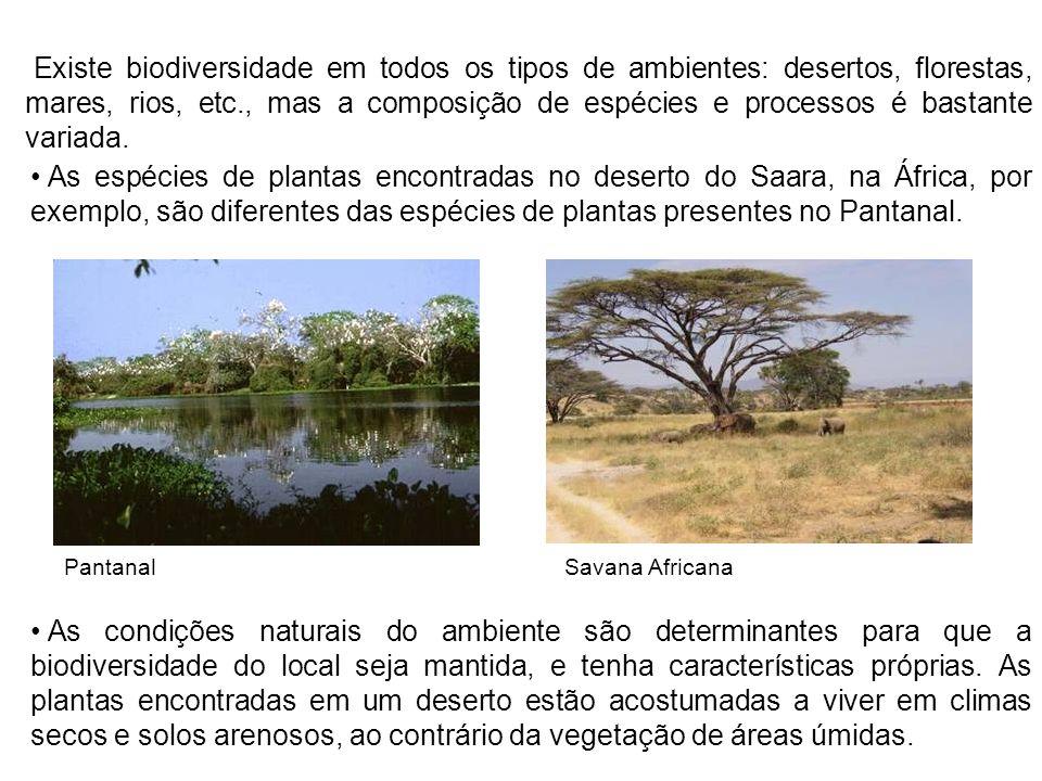 Existe biodiversidade em todos os tipos de ambientes: desertos, florestas, mares, rios, etc., mas a composição de espécies e processos é bastante vari