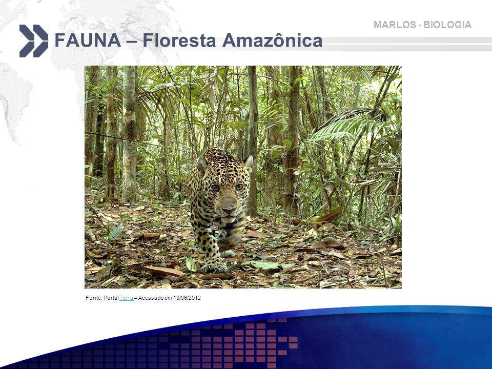 MARLOS - BIOLOGIA FAUNA – Floresta Amazônica Fonte: Portal Terra – Acessado em 13/06/2012Terra
