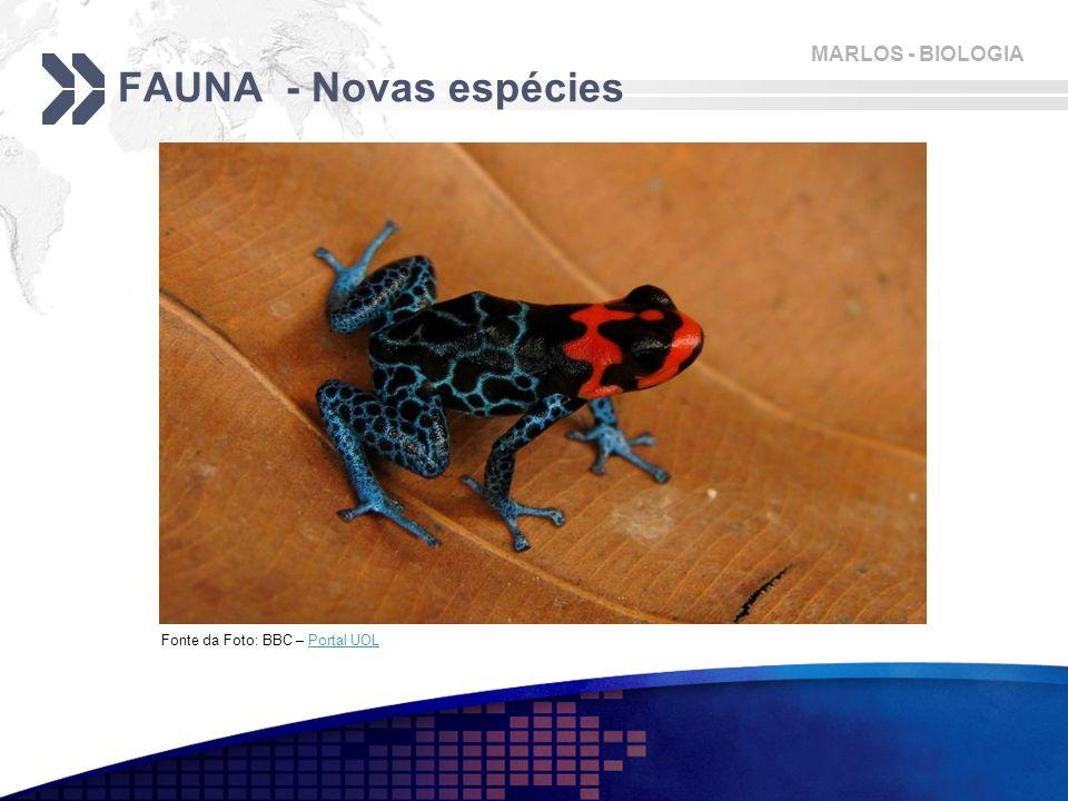 MARLOS - BIOLOGIA FAUNA - Novas espécies Fonte da Foto: BBC – Portal UOLPortal UOL