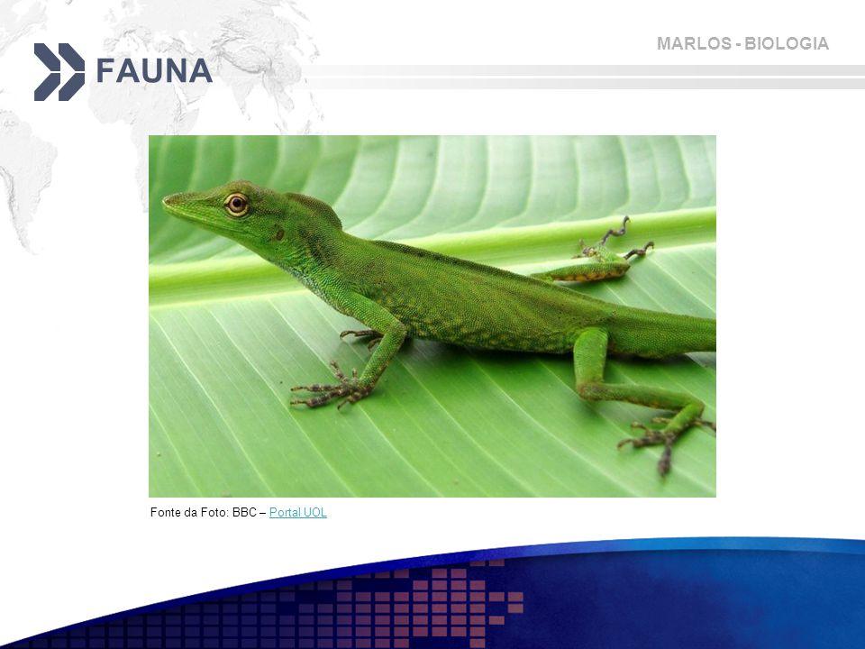 MARLOS - BIOLOGIA FAUNA Fonte da Foto: BBC – Portal UOLPortal UOL