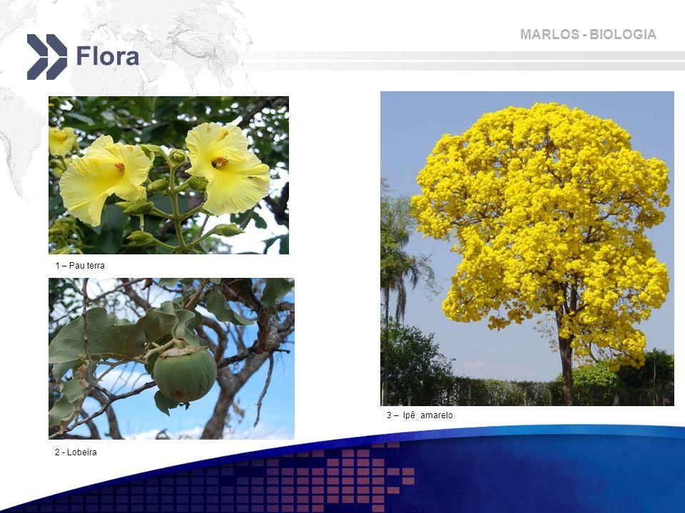 MARLOS - BIOLOGIA Flora 1 – Pau terra 2 - Lobeira 3 – Ipê amarelo