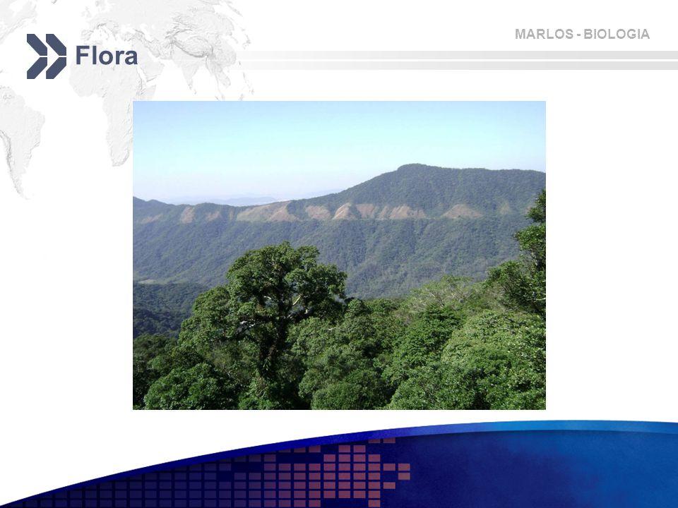 MARLOS - BIOLOGIA Flora
