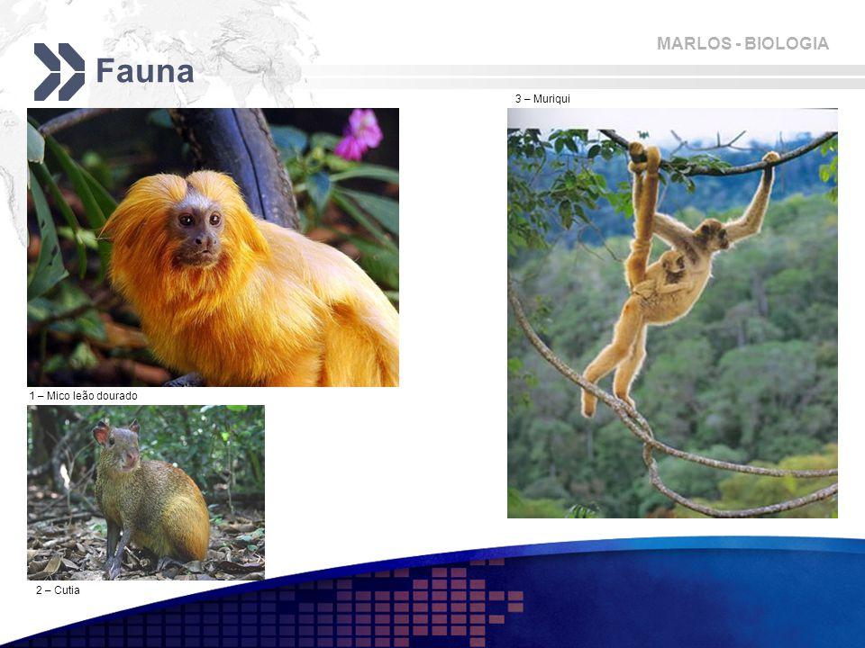 MARLOS - BIOLOGIA Fauna 2 – Cutia 1 – Mico leão dourado 3 – Muriqui