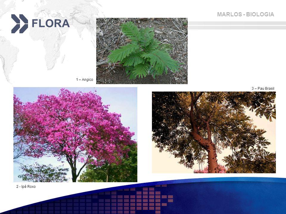 MARLOS - BIOLOGIA FLORA 2 - Ipê Roxo 1 – Angico 3 – Pau Brasil