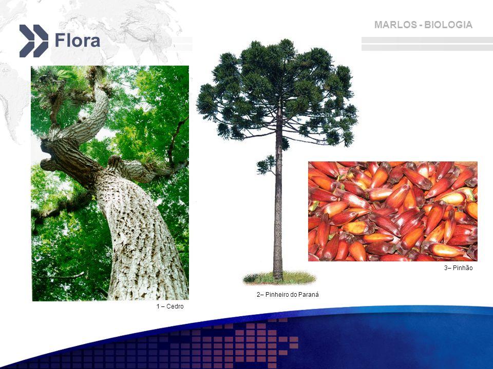 MARLOS - BIOLOGIA Flora 1 – Cedro 2– Pinheiro do Paraná 3– Pinhão