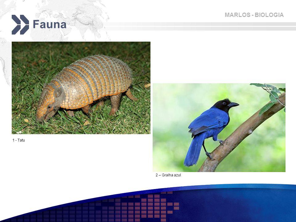 MARLOS - BIOLOGIA Fauna 1 - Tatu 2 – Gralha azul