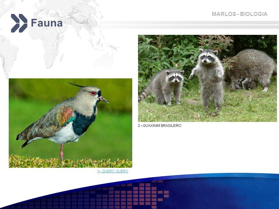 MARLOS - BIOLOGIA Fauna 1– QUERO QUERO 2 –GUAXINIM BRASILEIRO