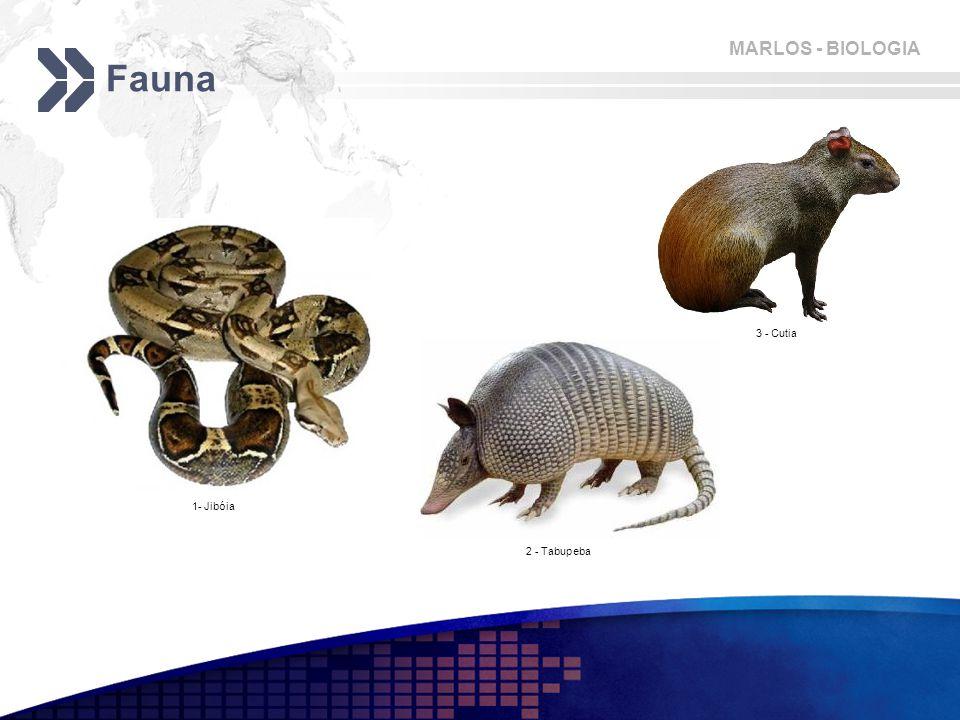 MARLOS - BIOLOGIA Fauna 1- Jibóia 2 - Tabupeba 3 - Cutia
