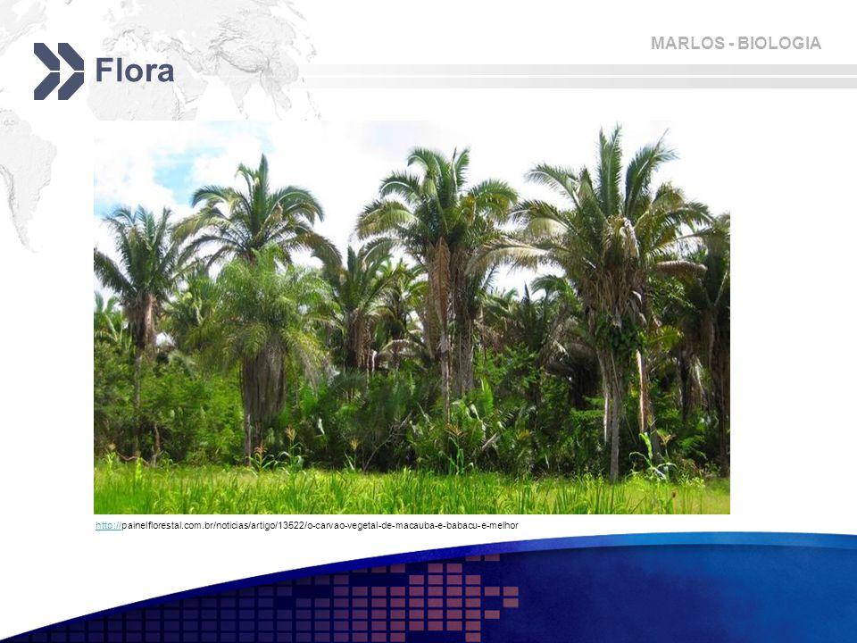 MARLOS - BIOLOGIA Flora http://http://painelflorestal.com.br/noticias/artigo/13522/o-carvao-vegetal-de-macauba-e-babacu-e-melhor