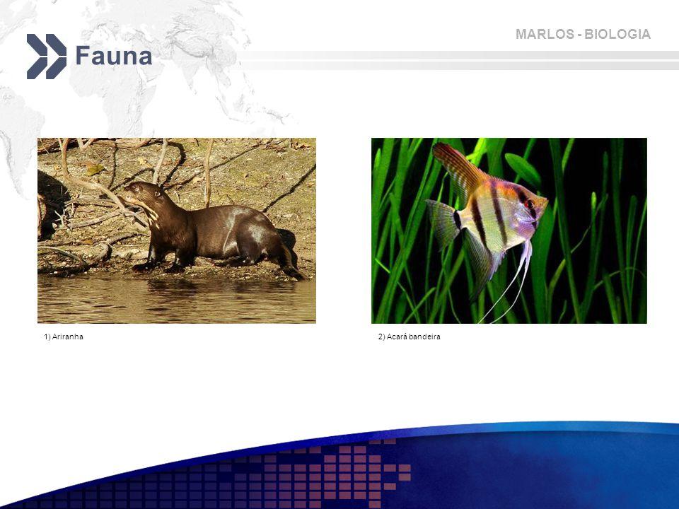 MARLOS - BIOLOGIA Fauna 1) Ariranha2) Acará bandeira