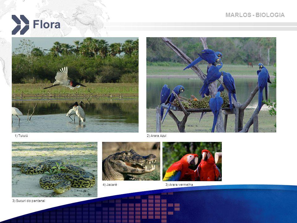 MARLOS - BIOLOGIA Flora 1) Tuiuiú2) Arara Azul 3) Sucuri do pantanal 4) Jacaré3) Arara vermelha