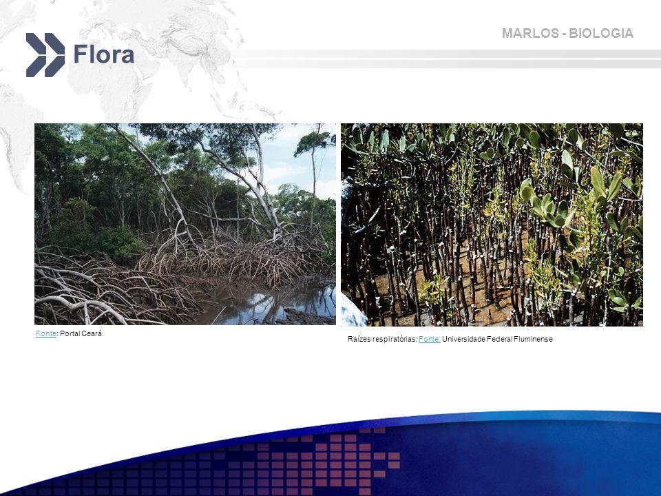 MARLOS - BIOLOGIA Flora FonteFonte: Portal Ceará Raízes respiratórias: Fonte: Universidade Federal FluminenseFonte:
