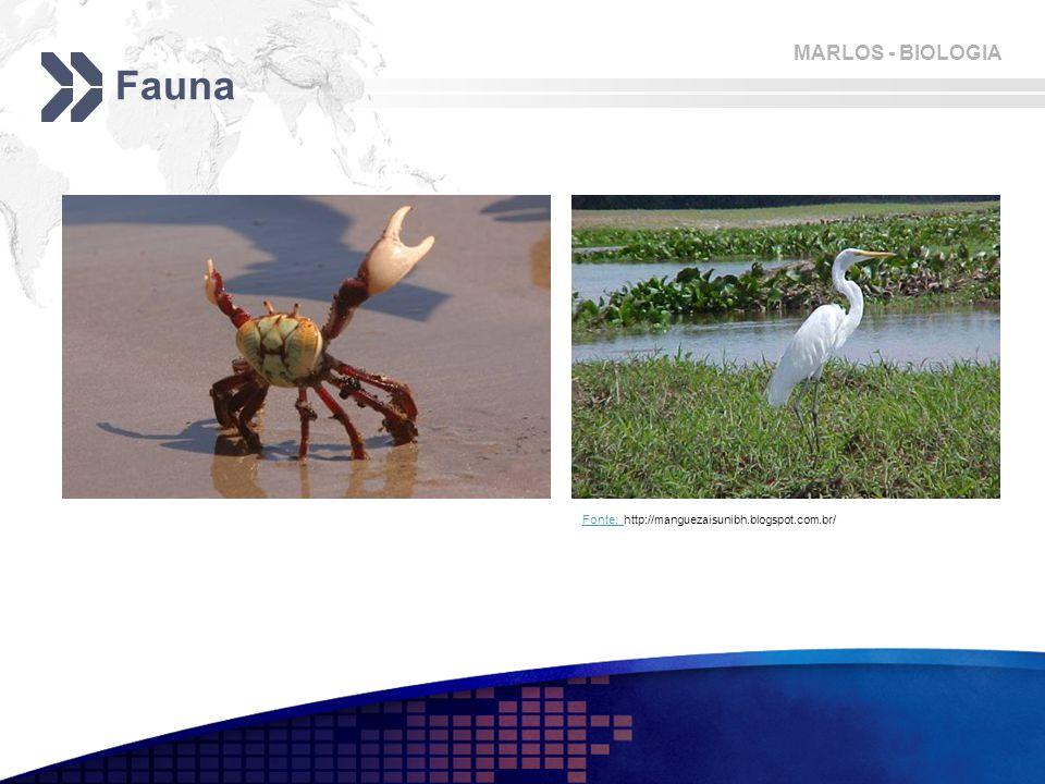 MARLOS - BIOLOGIA Fauna Fonte: Fonte: http://manguezaisunibh.blogspot.com.br/