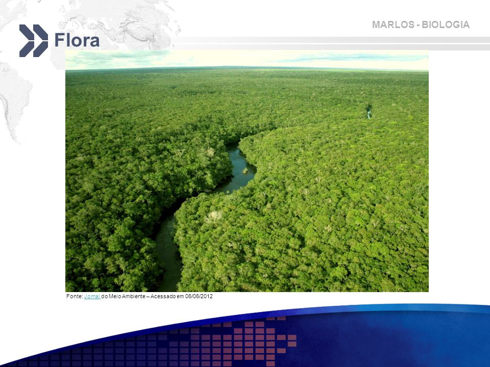 MARLOS - BIOLOGIA Flora Fonte: Jornal do Meio Ambiente – Acessado em 06/06/2012Jornal