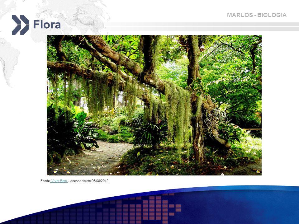 MARLOS - BIOLOGIA Flora Fonte: Viver Bem – Acessado em 06/06/2012: Viver Bem