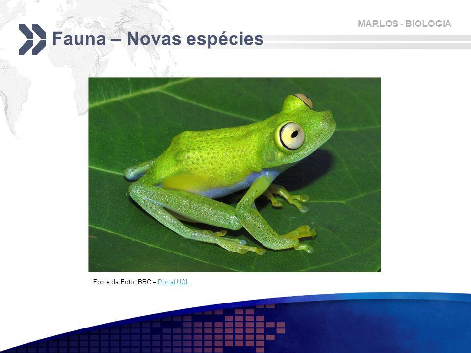 MARLOS - BIOLOGIA Fauna – Novas espécies Fonte da Foto: BBC – Portal UOLPortal UOL