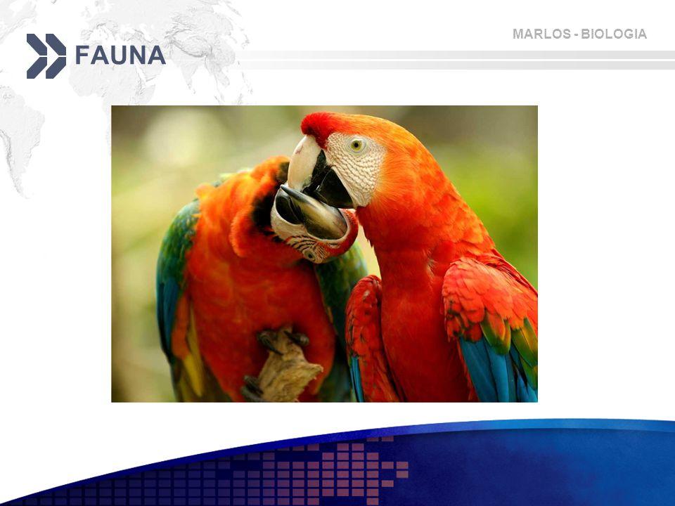 MARLOS - BIOLOGIA FAUNA