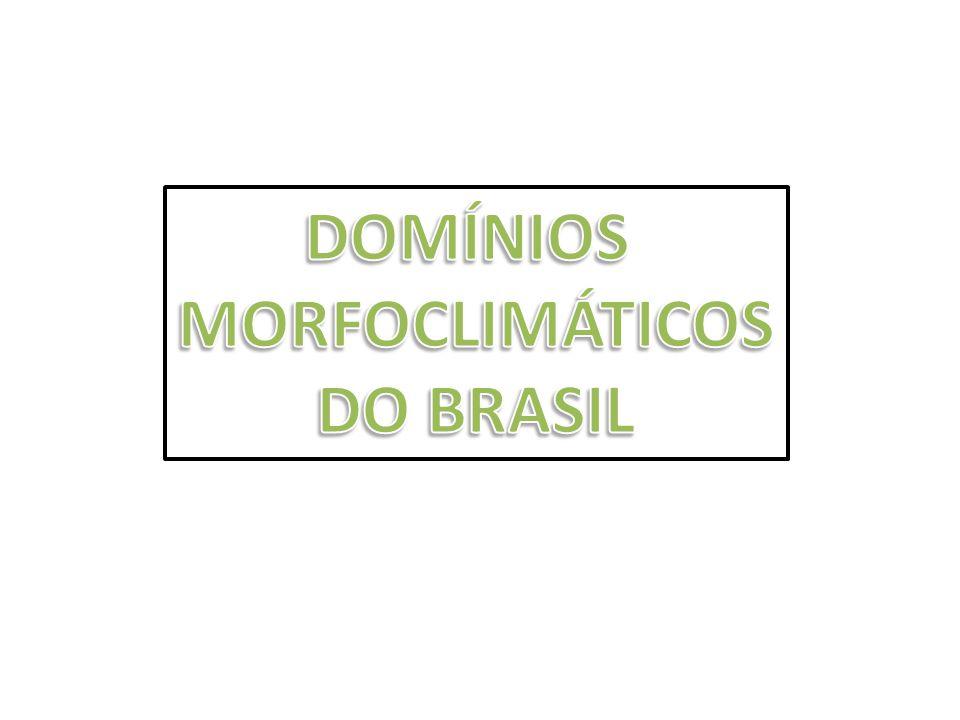 MANGUEZAIS São típicos de regiões tropicais.No Brasil se estende do Amapá a Santa Catarina.