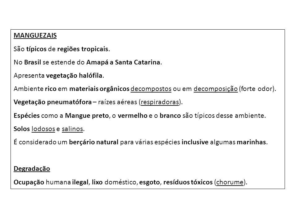MANGUEZAIS São típicos de regiões tropicais. No Brasil se estende do Amapá a Santa Catarina. Apresenta vegetação halófila. Ambiente rico em materiais