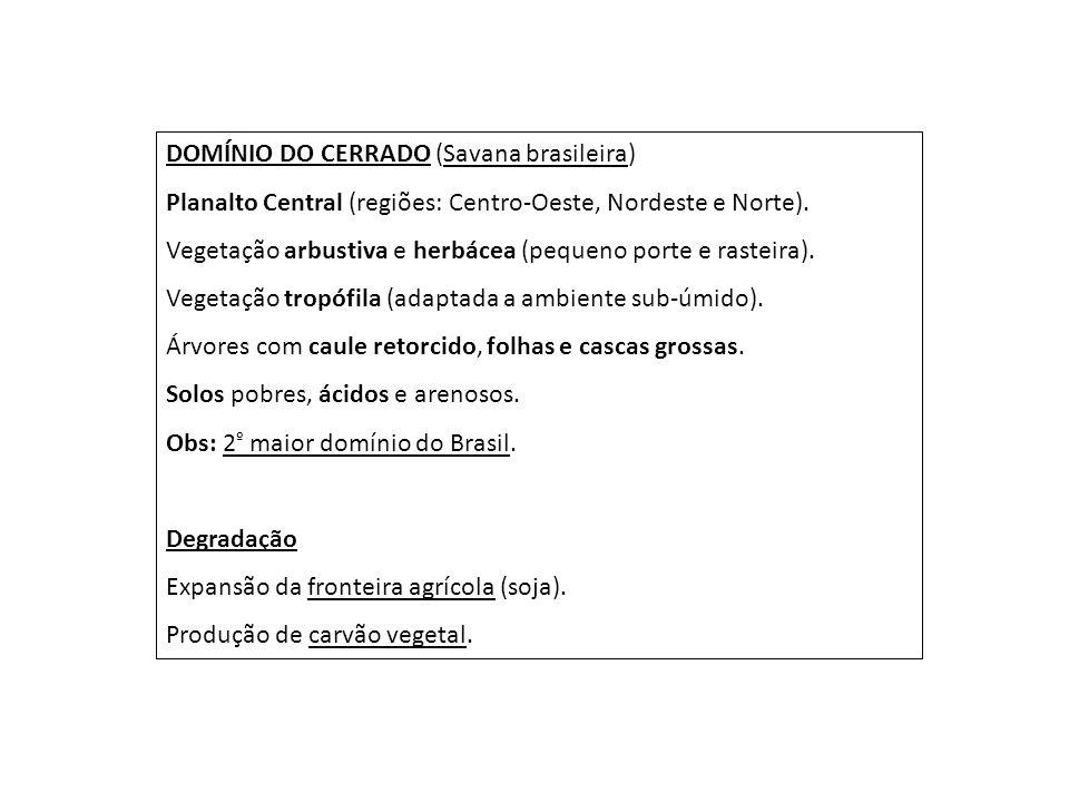 DOMÍNIO DO CERRADO (Savana brasileira) Planalto Central (regiões: Centro-Oeste, Nordeste e Norte). Vegetação arbustiva e herbácea (pequeno porte e ras