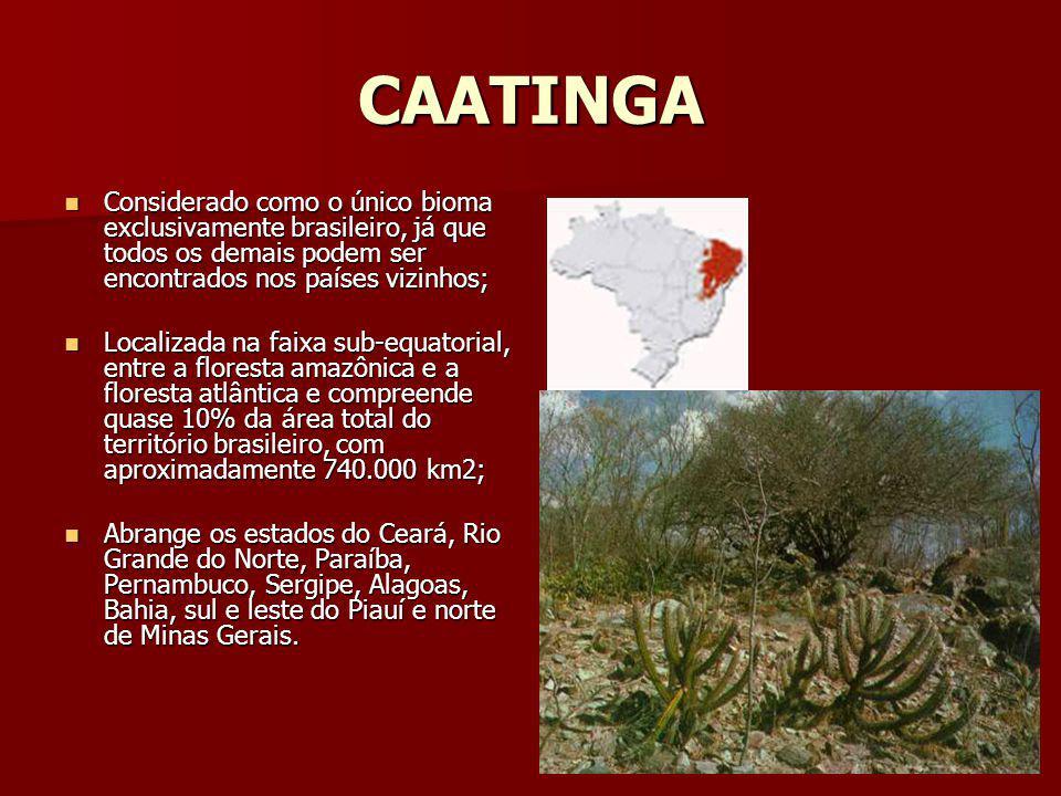 CAATINGA Considerado como o único bioma exclusivamente brasileiro, já que todos os demais podem ser encontrados nos países vizinhos; Considerado como