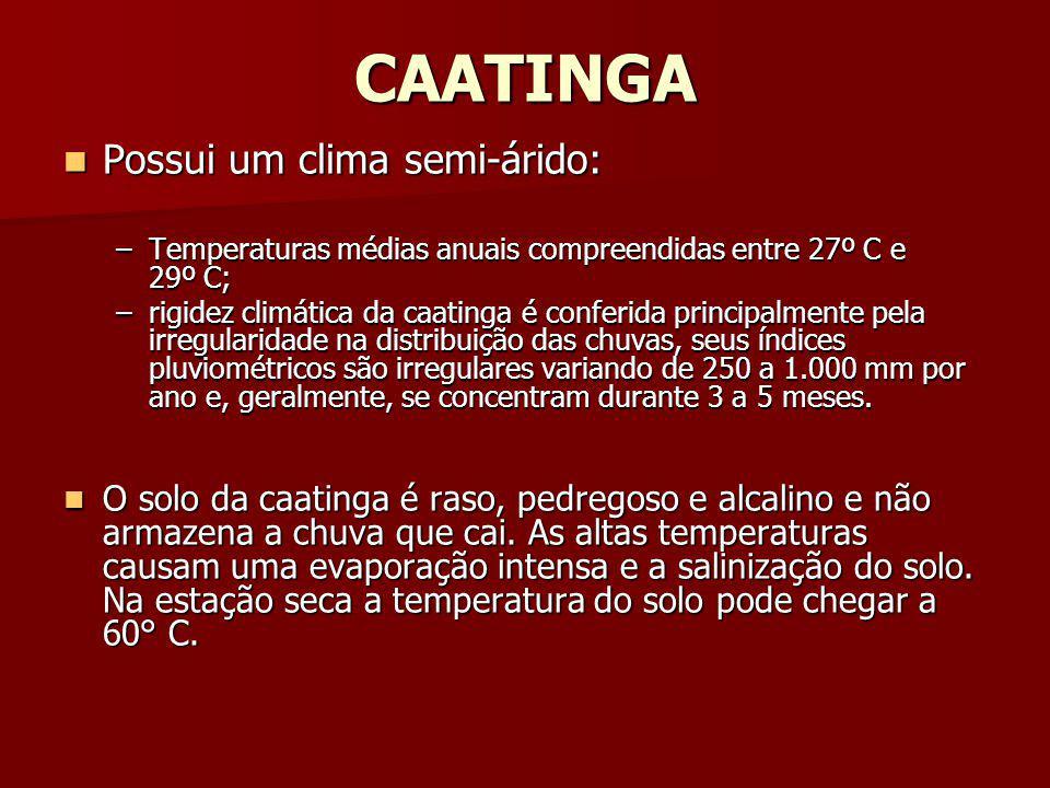 CAATINGA Possui um clima semi-árido: Possui um clima semi-árido: –Temperaturas médias anuais compreendidas entre 27º C e 29º C; –rigidez climática da