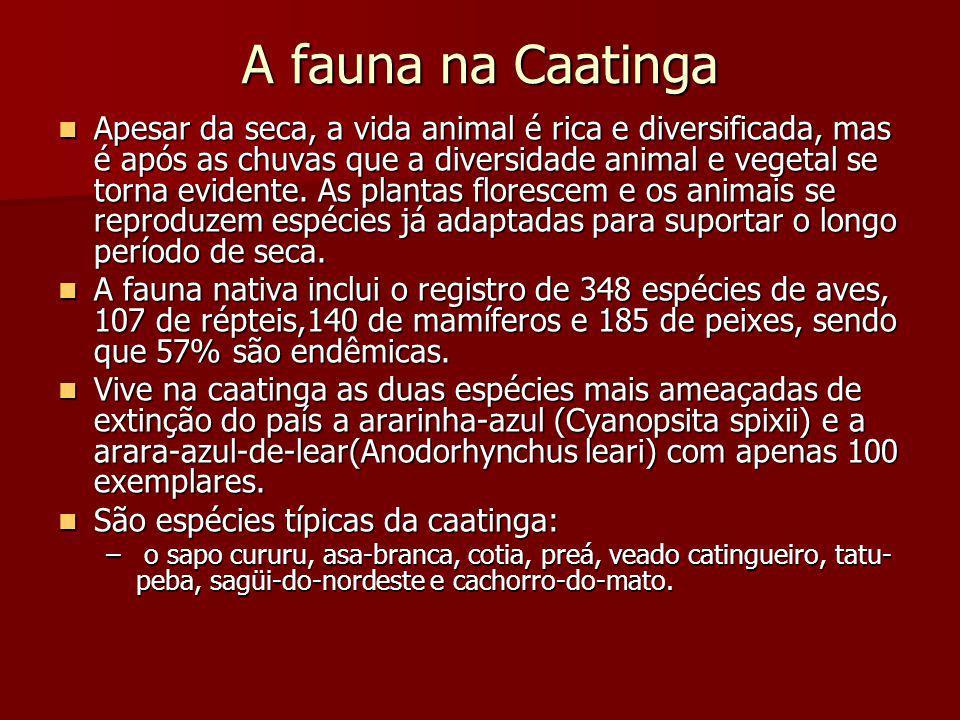 A fauna na Caatinga Apesar da seca, a vida animal é rica e diversificada, mas é após as chuvas que a diversidade animal e vegetal se torna evidente. A