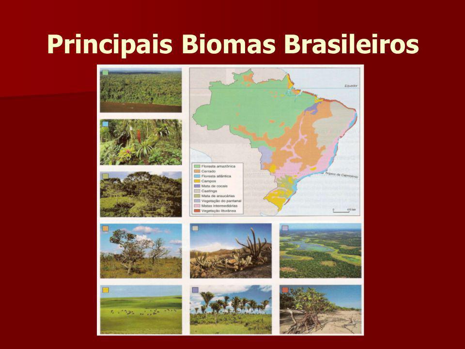 Floresta Amazônica Localiza-se ao norte do continente sul-americano; Localiza-se ao norte do continente sul-americano; Dos pouco mais de 6 milhões de km2 estima-se 67% da Floresta Equatorial Amazônica estão em território brasileiro, sendo o restante distribuído entre a Venezuela, Suriname, Guianas, Bolívia, Colômbia, Peru e Equador Dos pouco mais de 6 milhões de km2 estima-se 67% da Floresta Equatorial Amazônica estão em território brasileiro, sendo o restante distribuído entre a Venezuela, Suriname, Guianas, Bolívia, Colômbia, Peru e Equador