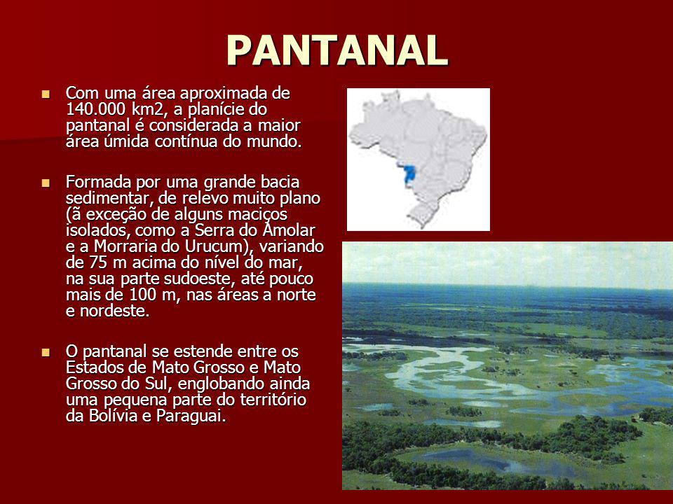PANTANAL Com uma área aproximada de 140.000 km2, a planície do pantanal é considerada a maior área úmida contínua do mundo. Com uma área aproximada de