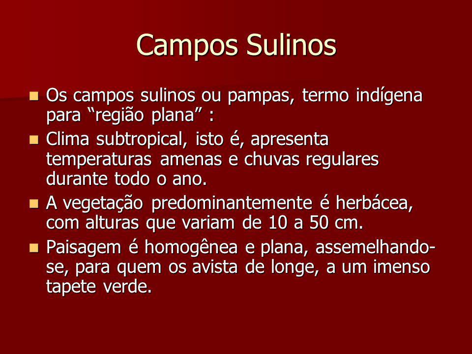 """Campos Sulinos Os campos sulinos ou pampas, termo indígena para """"região plana"""" : Os campos sulinos ou pampas, termo indígena para """"região plana"""" : Cli"""