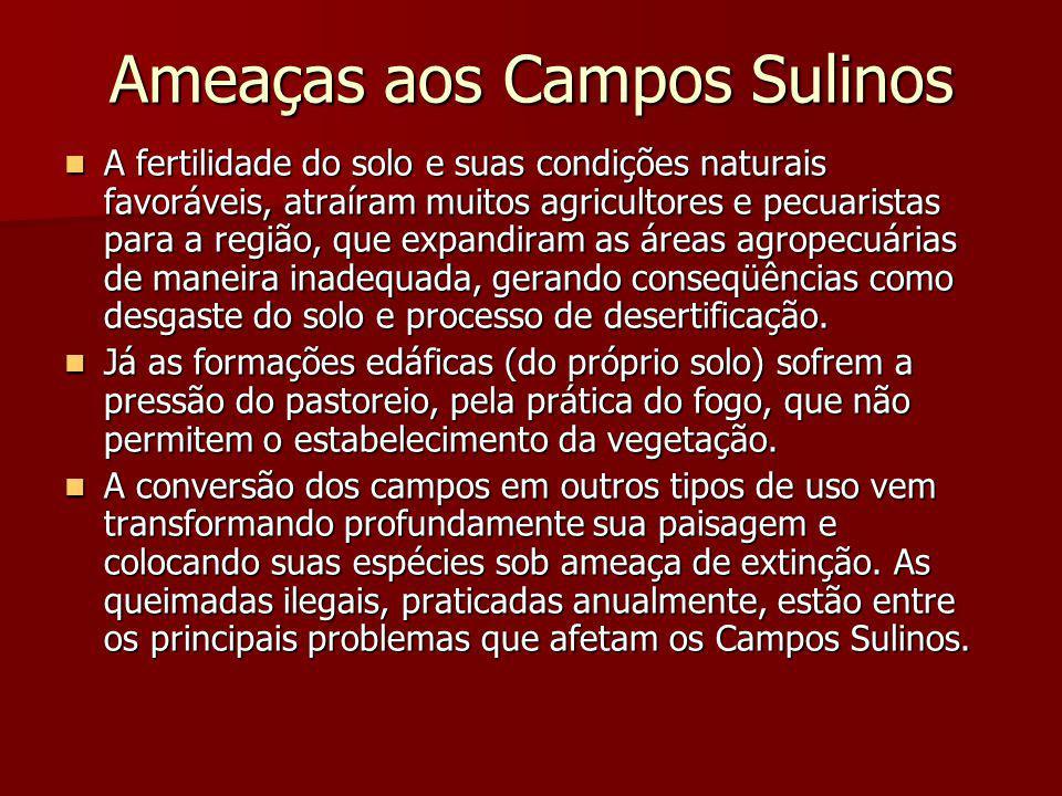 Ameaças aos Campos Sulinos A fertilidade do solo e suas condições naturais favoráveis, atraíram muitos agricultores e pecuaristas para a região, que e