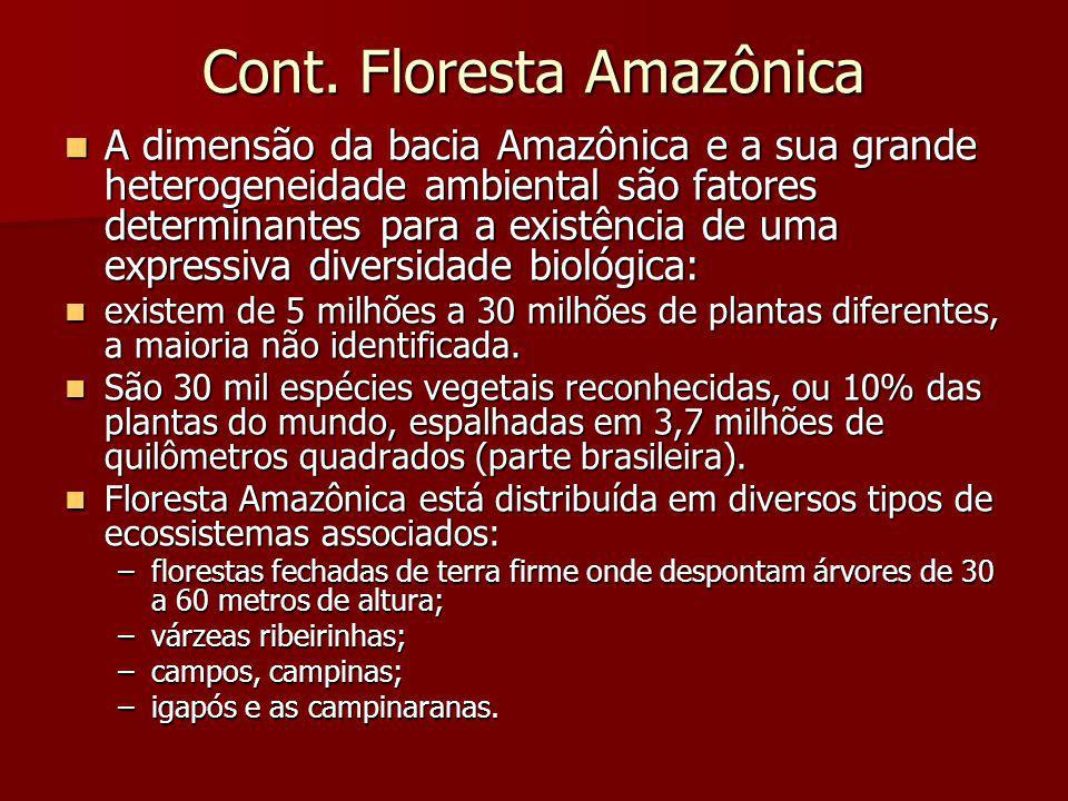 Cont. Floresta Amazônica A dimensão da bacia Amazônica e a sua grande heterogeneidade ambiental são fatores determinantes para a existência de uma exp