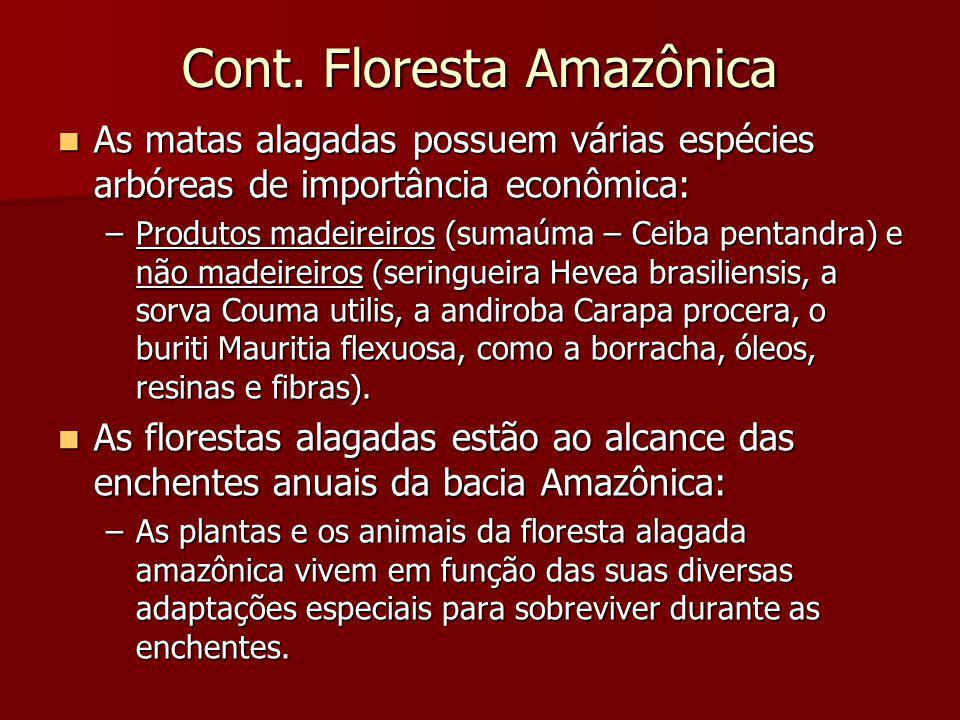 Cont. Floresta Amazônica As matas alagadas possuem várias espécies arbóreas de importância econômica: As matas alagadas possuem várias espécies arbóre