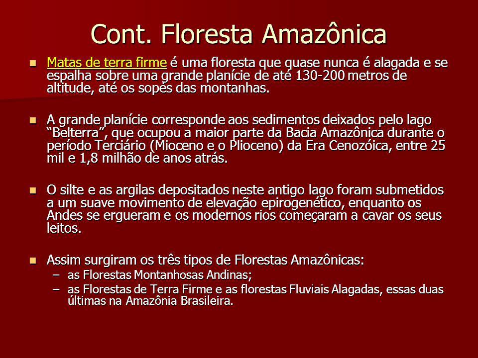 Cont. Floresta Amazônica Matas de terra firme é uma floresta que quase nunca é alagada e se espalha sobre uma grande planície de até 130-200 metros de