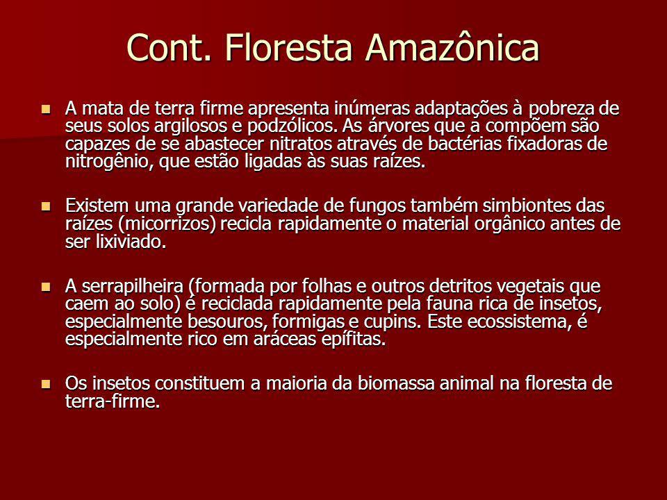 Cont. Floresta Amazônica A mata de terra firme apresenta inúmeras adaptações à pobreza de seus solos argilosos e podzólicos. As árvores que a compõem