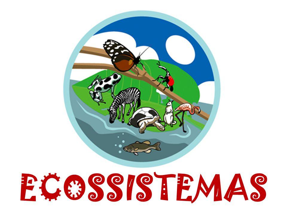Ecossistema – local em que se considera os seres vivos que ali se encontram e as condições químicas e físicas que o meio lhes proporciona para sua sobrevivência.