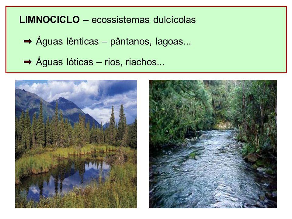 LIMNOCICLO – ecossistemas dulcícolas Águas lênticas – pântanos, lagoas... Águas lóticas – rios, riachos...