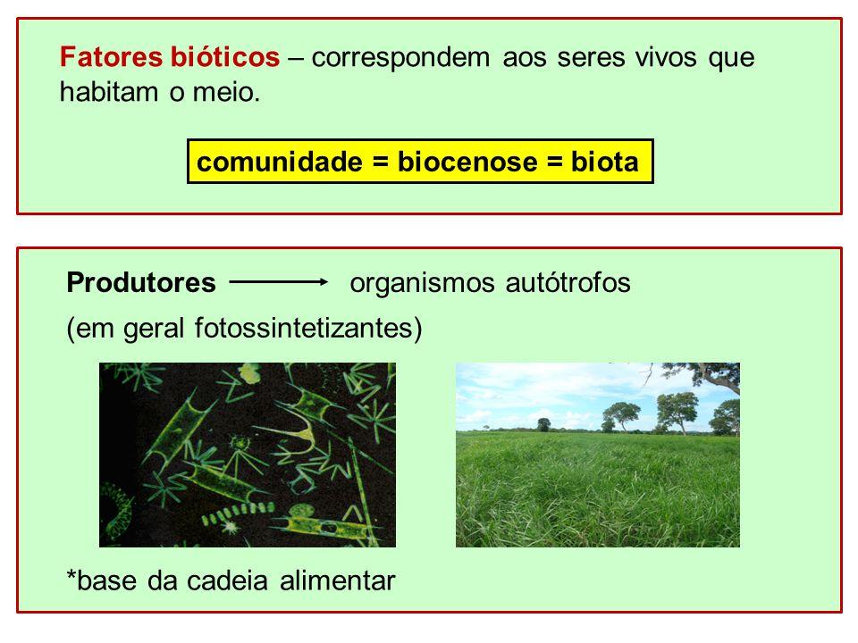 Consumidoresorganismos heterótrofos (herbívoros, carnívoros e dedritívoros) Decompositoresorganismos heterótrofos (alimentam-se de matéria orgânica morta) * Promovem a reciclagem da matéria