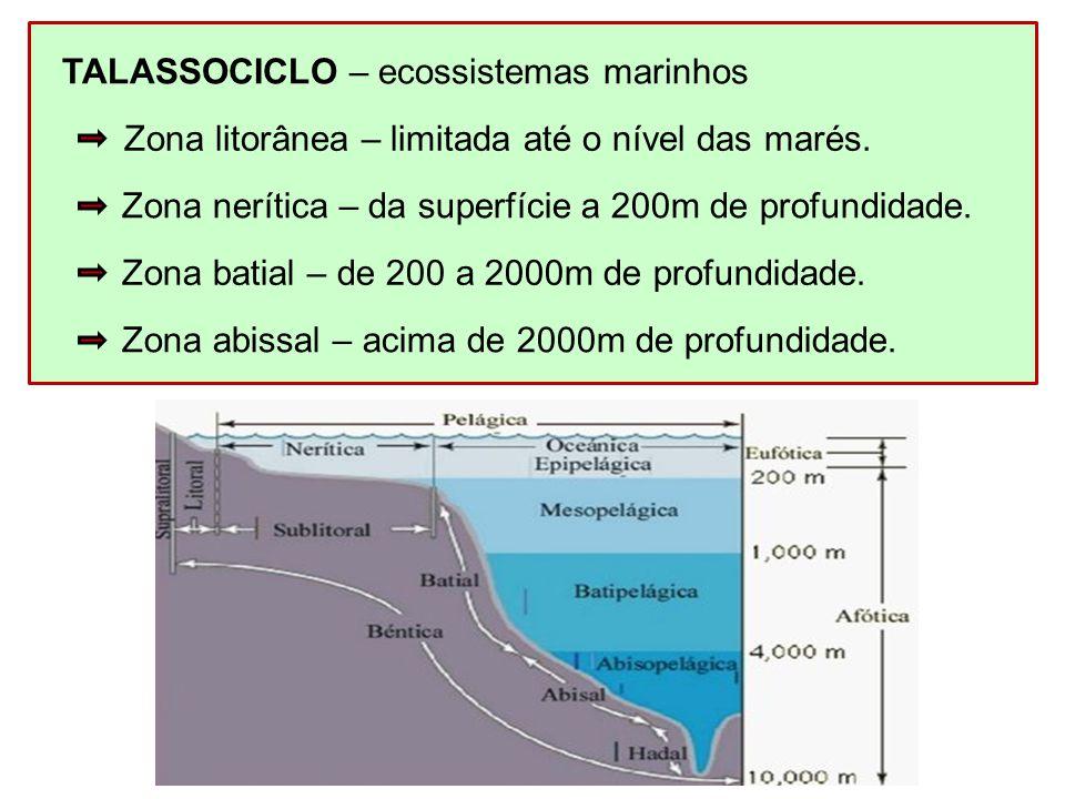 TALASSOCICLO – ecossistemas marinhos Zona nerítica – da superfície a 200m de profundidade. Zona batial – de 200 a 2000m de profundidade. Zona abissal