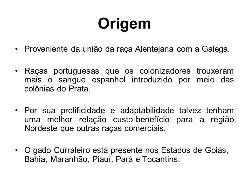 Origem Proveniente da união da raça Alentejana com a Galega. Raças portuguesas que os colonizadores trouxeram mais o sangue espanhol introduzido por m