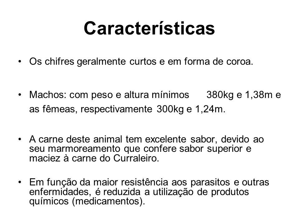 Características Os chifres geralmente curtos e em forma de coroa. Machos: com peso e altura mínimos 380kg e 1,38m e as fêmeas, respectivamente 300kg e