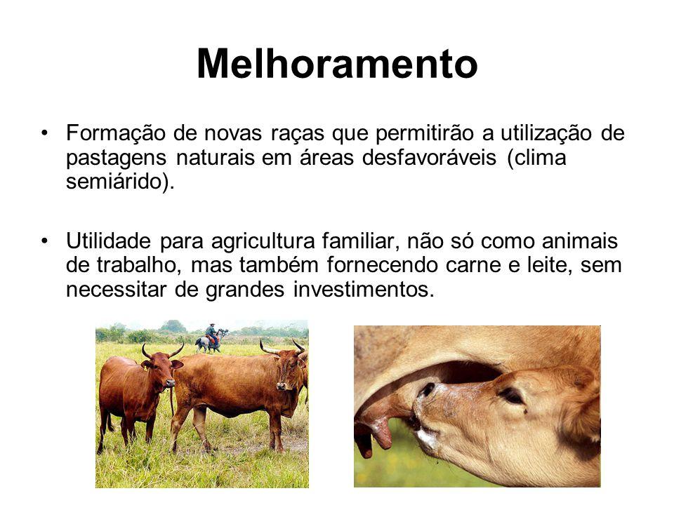 Melhoramento Formação de novas raças que permitirão a utilização de pastagens naturais em áreas desfavoráveis (clima semiárido). Utilidade para agricu