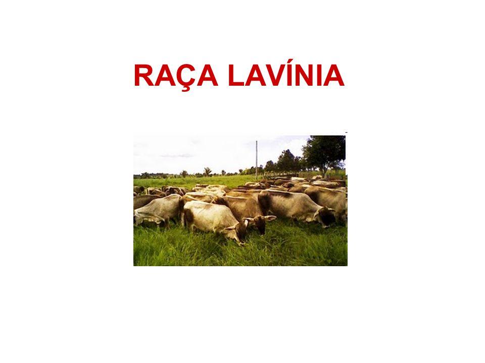RAÇA LAVÍNIA