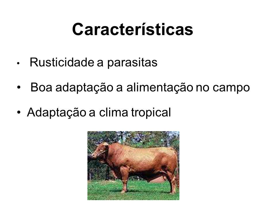 Características Rusticidade a parasitas Boa adaptação a alimentação no campo Adaptação a clima tropical