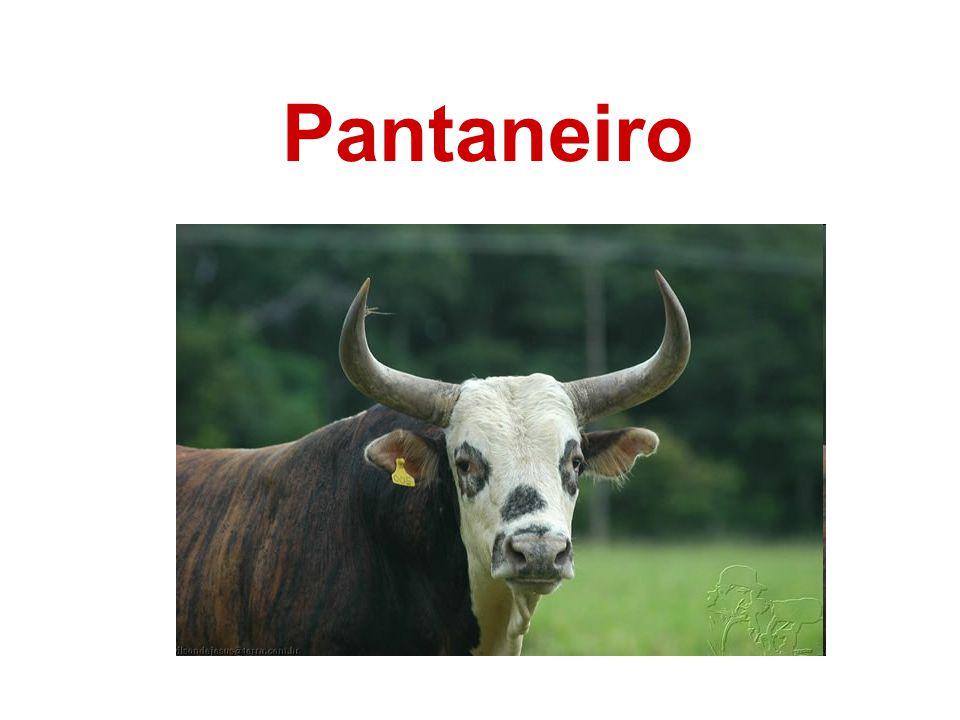 Pantaneiro